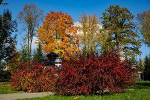 Złota Polska jesień w Parku Zdrojowym