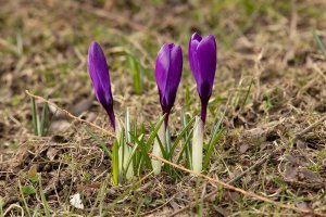 Pierwszy dzień wiosny w Parku Zdrojowym