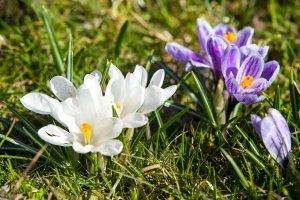 Przyszła wiosna, idą święta 3